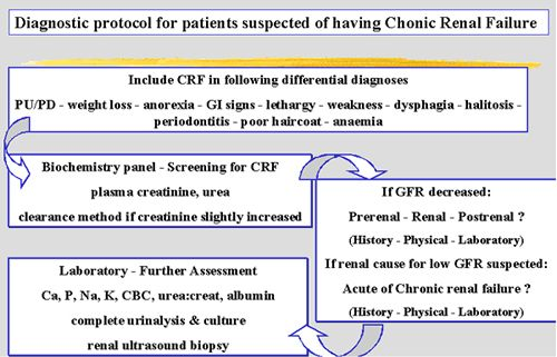 The Diagnosis And Treatment Of Chronic Renal Failure In The Dog Cat Wsava2004 Vin