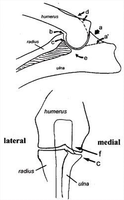 Examining Elbow Dysplasia - TUFTSBG2005 - VIN