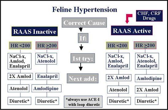 Feline Hypertension Risks And Management Wsava2005 Vin