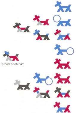 Figure 2 - Stick Dog Pedigree