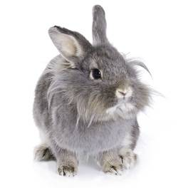 Intermittent Soft Cecotropes in Rabbits | House Rabbit Society