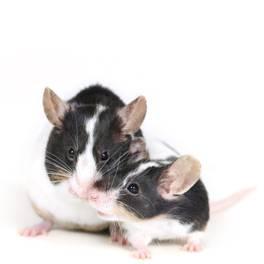 Small Animal Nutrition | House Rabbit Society