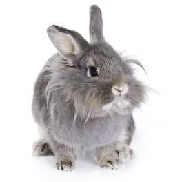 Hind Limb Weakness In The Rabbit House Rabbit Society