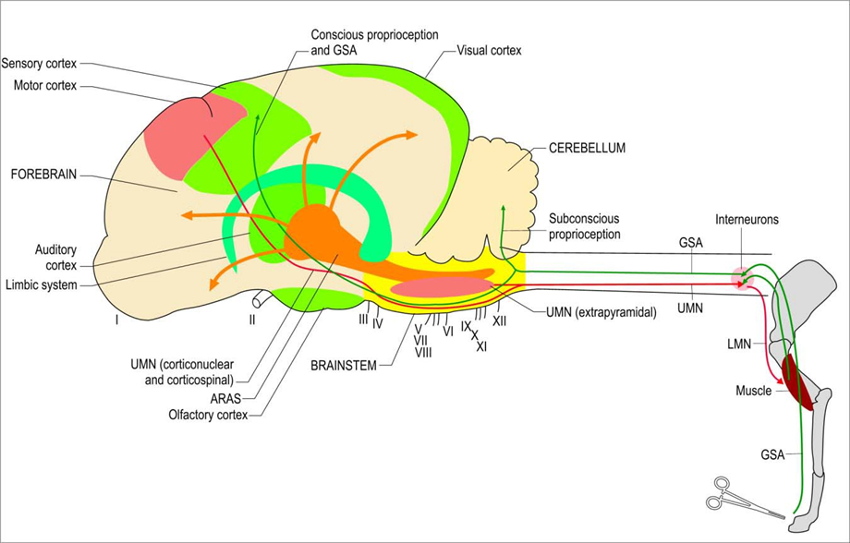 Figure 1. The NeuroMap of the brain