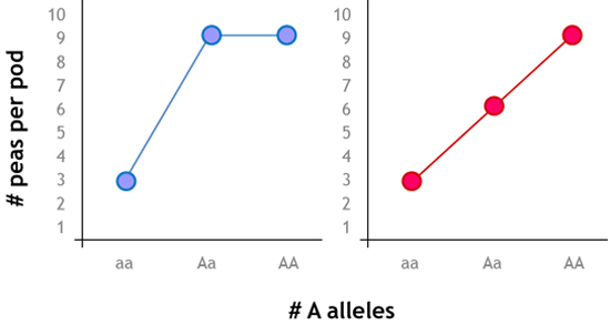 Figure 2. Hypothetical examples of complete dominance (L) and completely additive (R) A allele