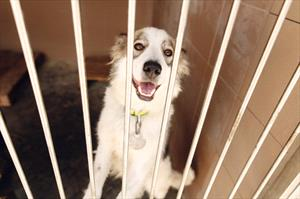 dog in kennel Deposit Photo