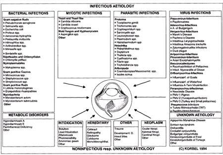 Avian Ophthalmology-Principles and Application - WSAVA2002 - VIN