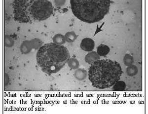 Mast Cell Tumors: Hot New Diagnostics and Treatment