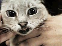 veterinarypartner.vin.com